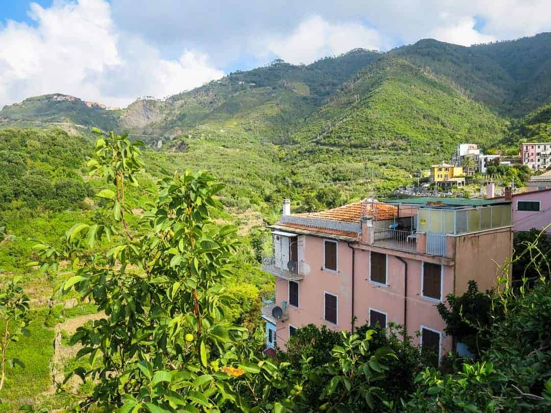 Terraces surround Corniglia