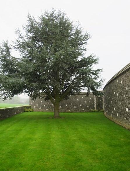 Tree at Tyne Cot Cemetery
