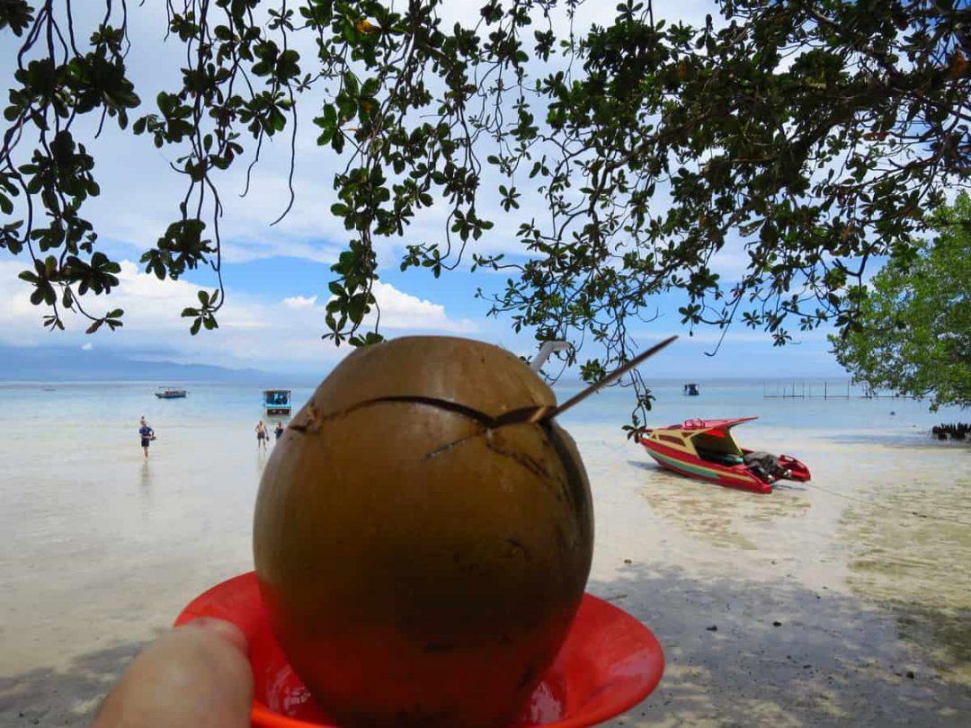 Bunaken Island coconuts