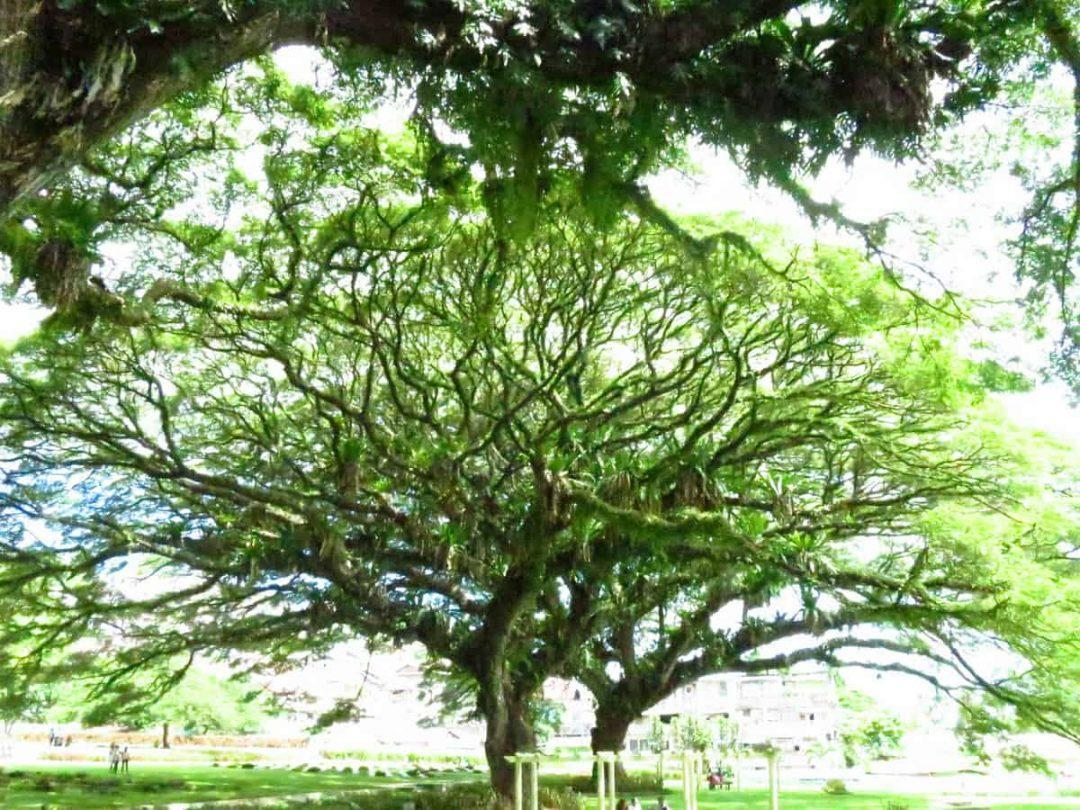 Ambon War Cemetery