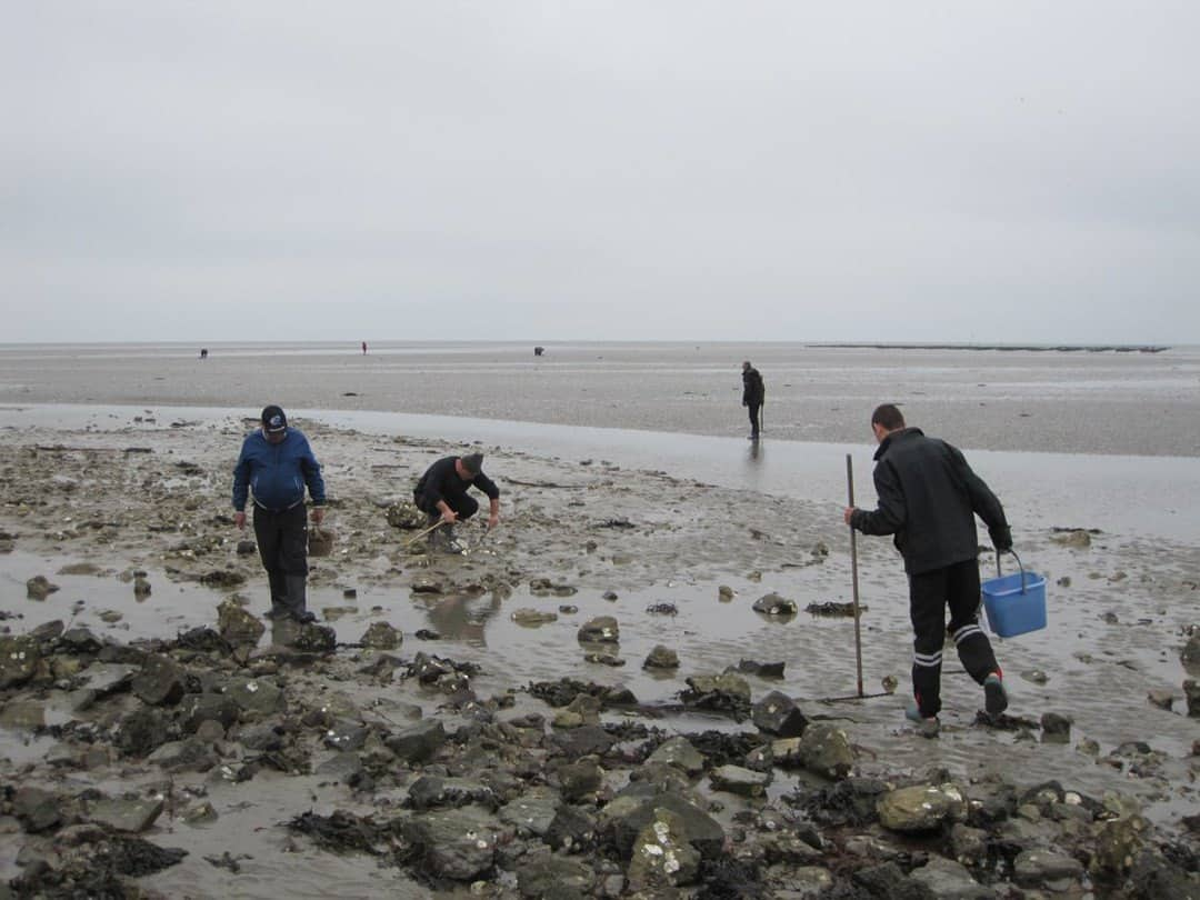 Shellfish hunting and collecting near Passage du Gois