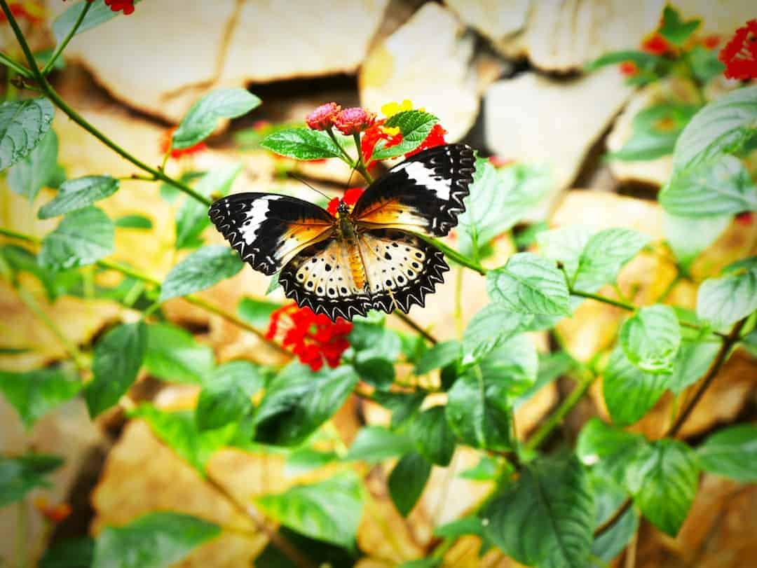butterly at mai chau ecolodge