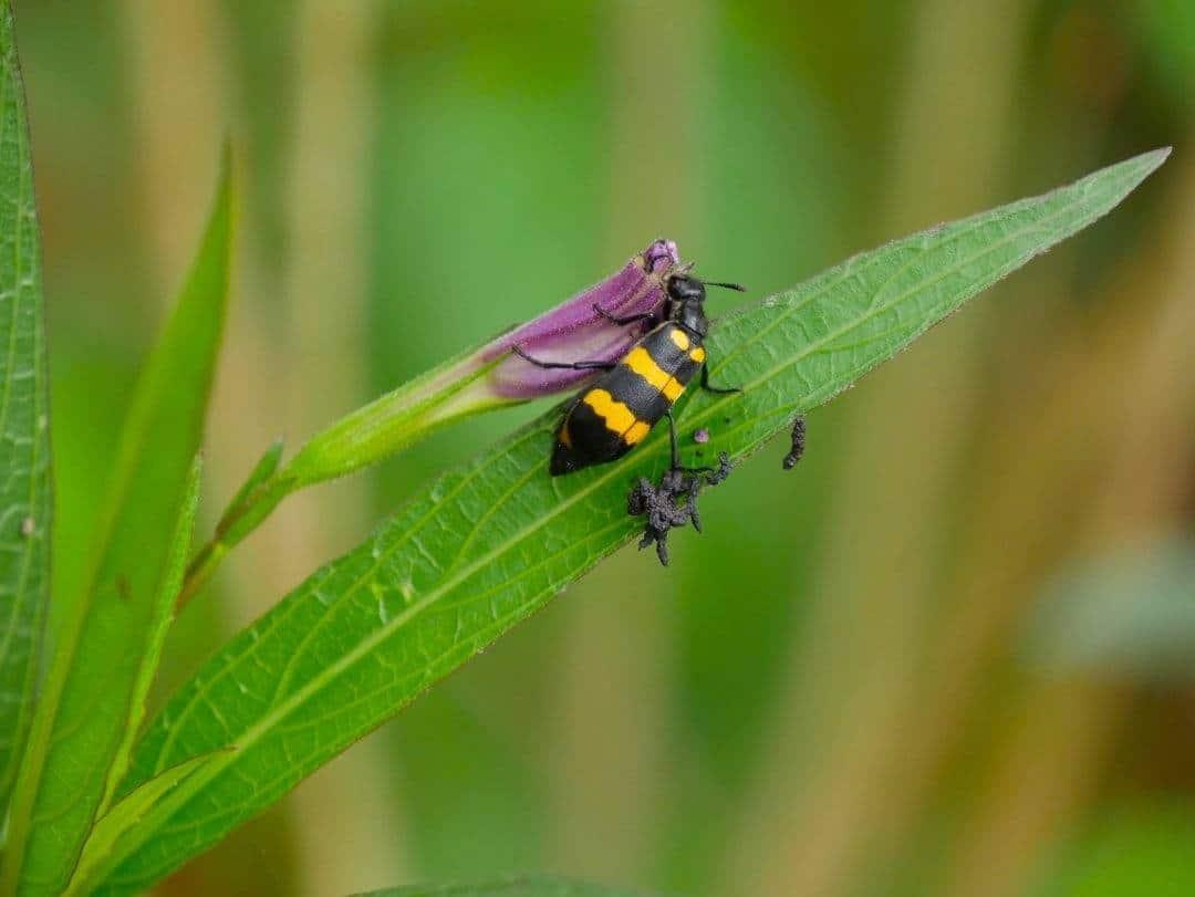 bugs at mai chau eco lodge