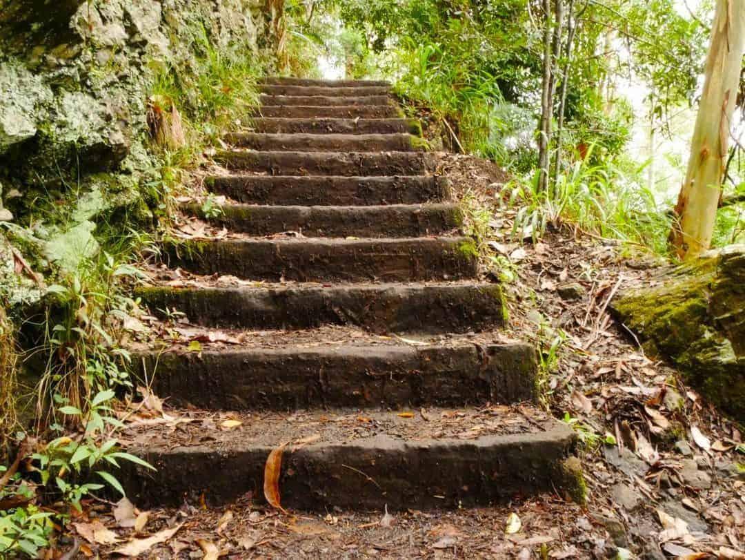 best hiking tracks in springbrook national park