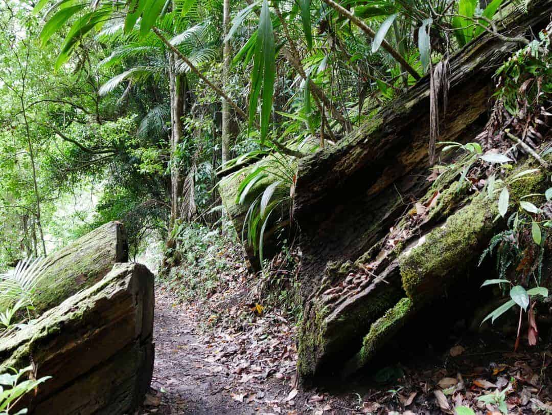 obstacles on the best hiking tracks in springbrook national park