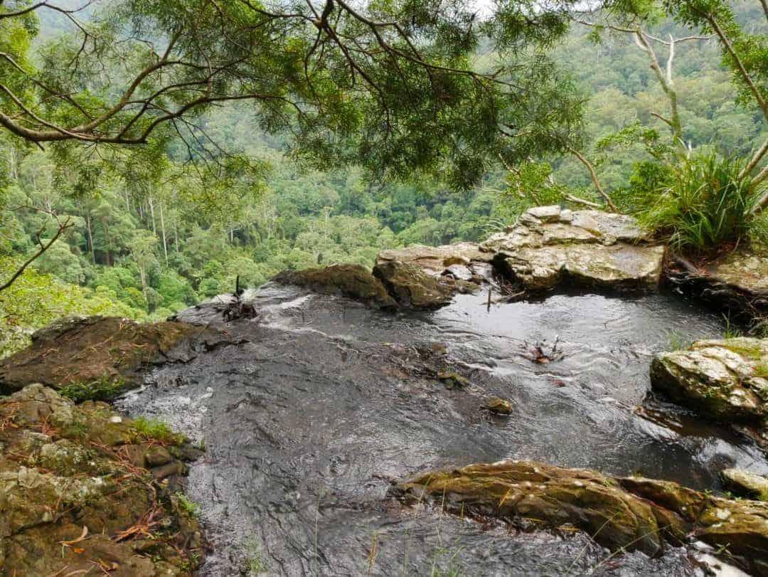 best-hiking-tracks-in-springbrook-national-park