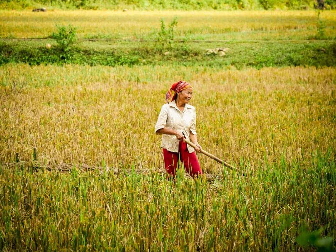 Mai Chau Day trip from Hanoi - women working in the field