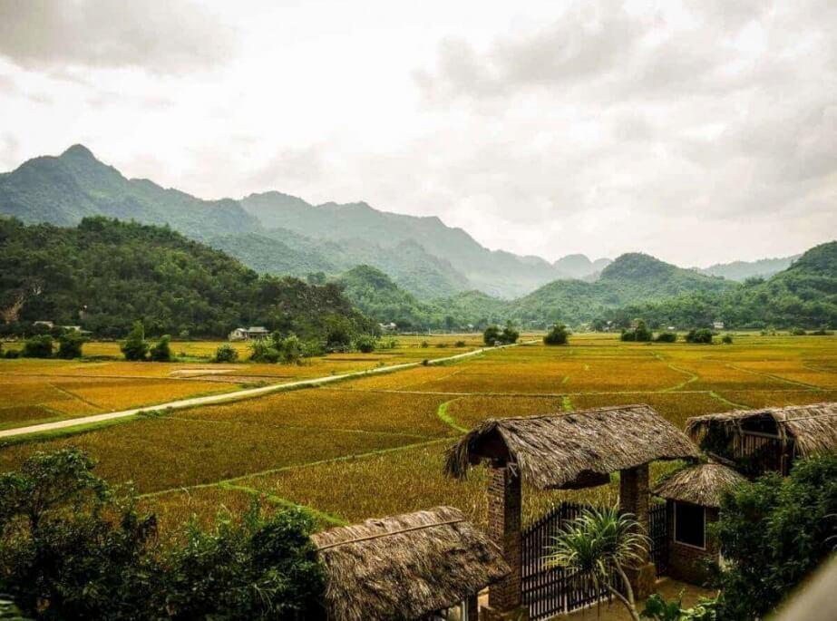 mai-chau-day-trip-from-hanoi-rice-fields