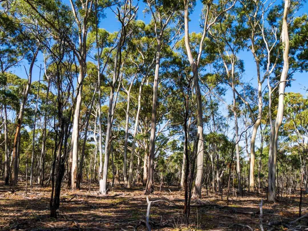 Best tour to see wild koalas and kangaroos in Melb