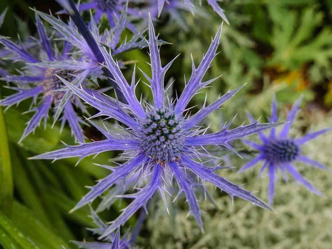 Richmond Park flowers