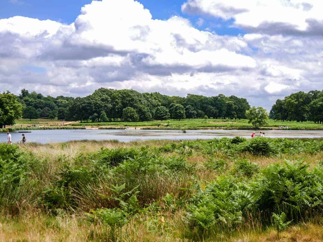 Richmond Park lakes