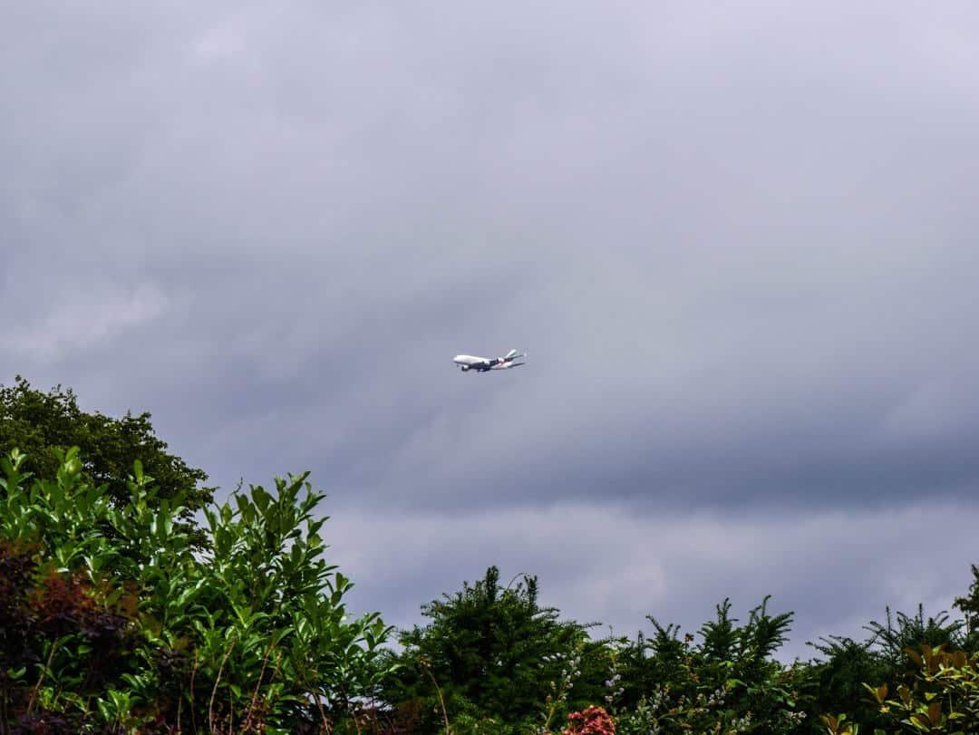Richmond Park plane spotting