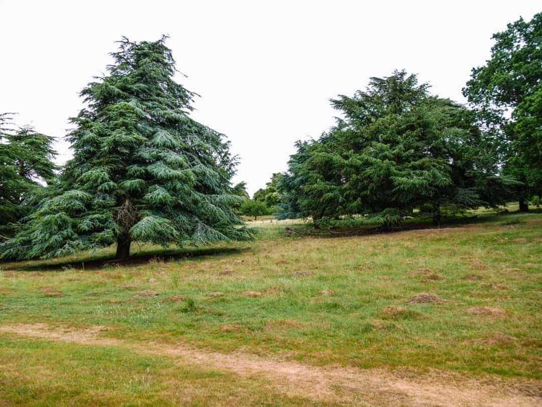 Richmond Park rolling hills
