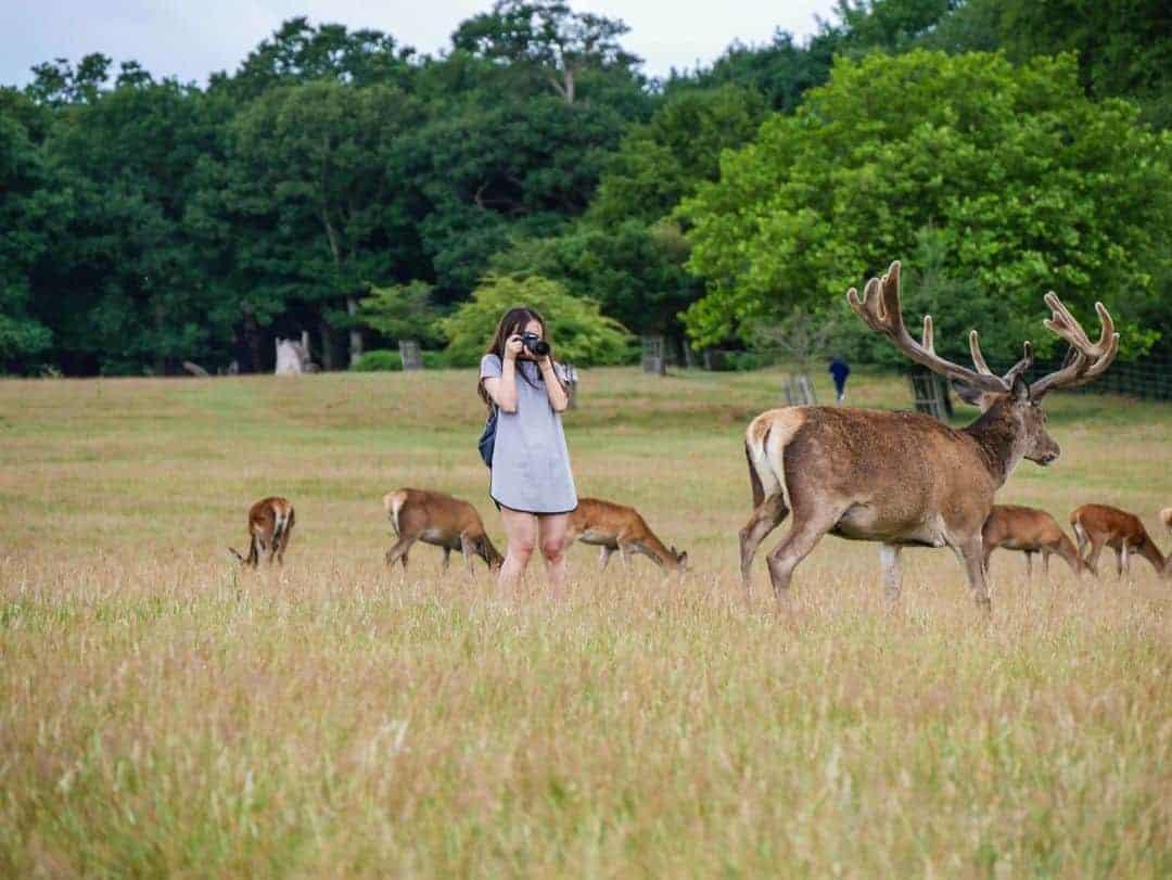 Richmond Park tourists