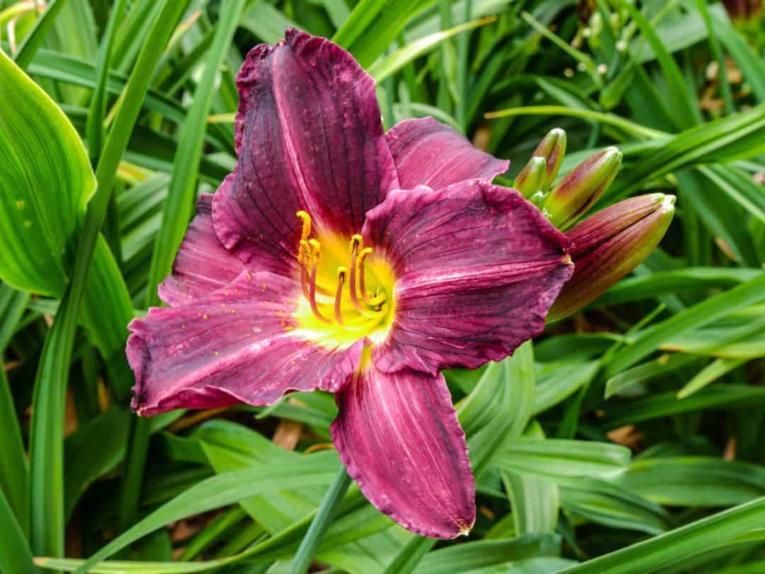 flowers at Richmond Park