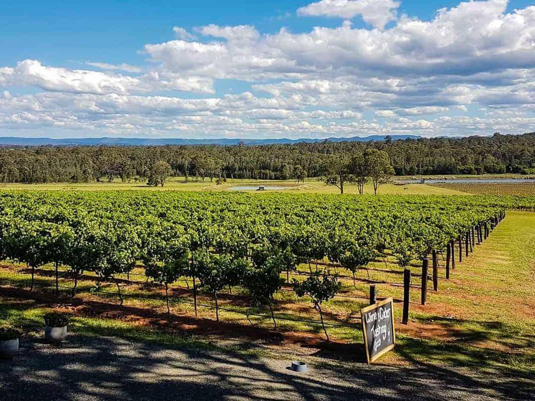 hunter valley nsw australia vineyard