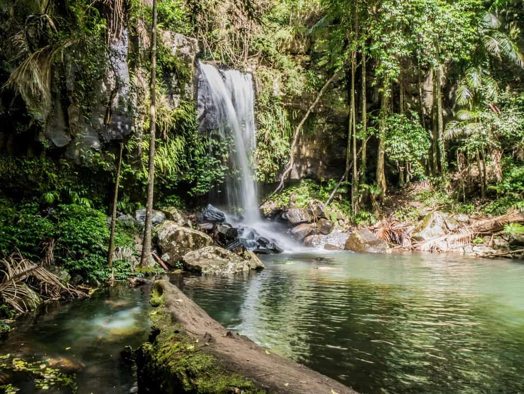 Curtis Falls in the Joalah section of the Tamborine National Park