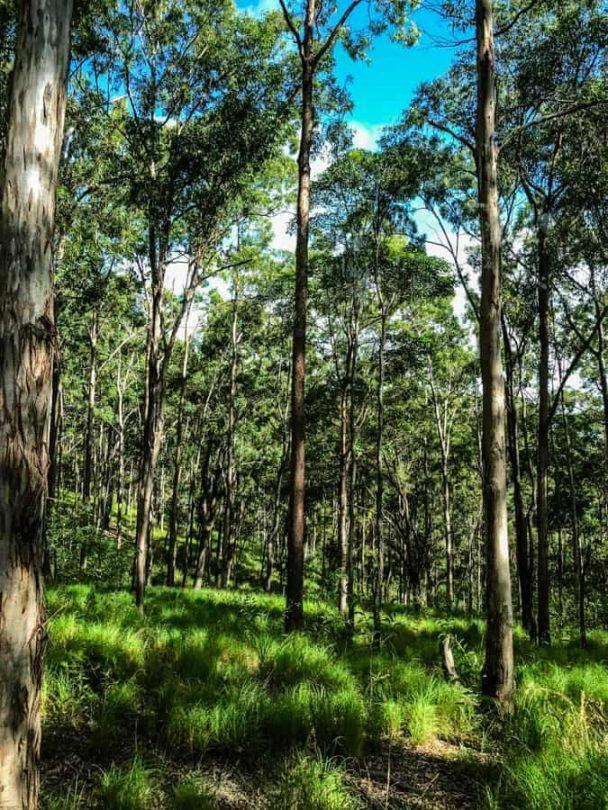 Along the 4WD tracks leading up to Mt Tamborine