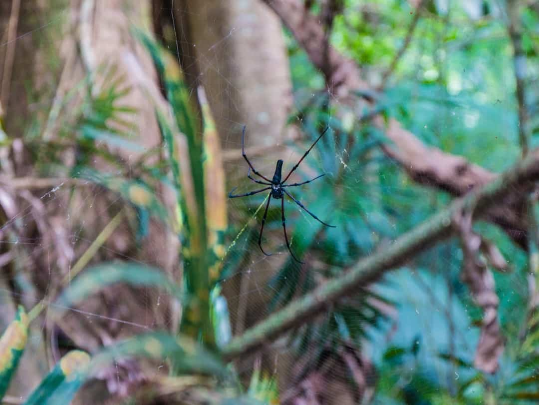 spider in national park
