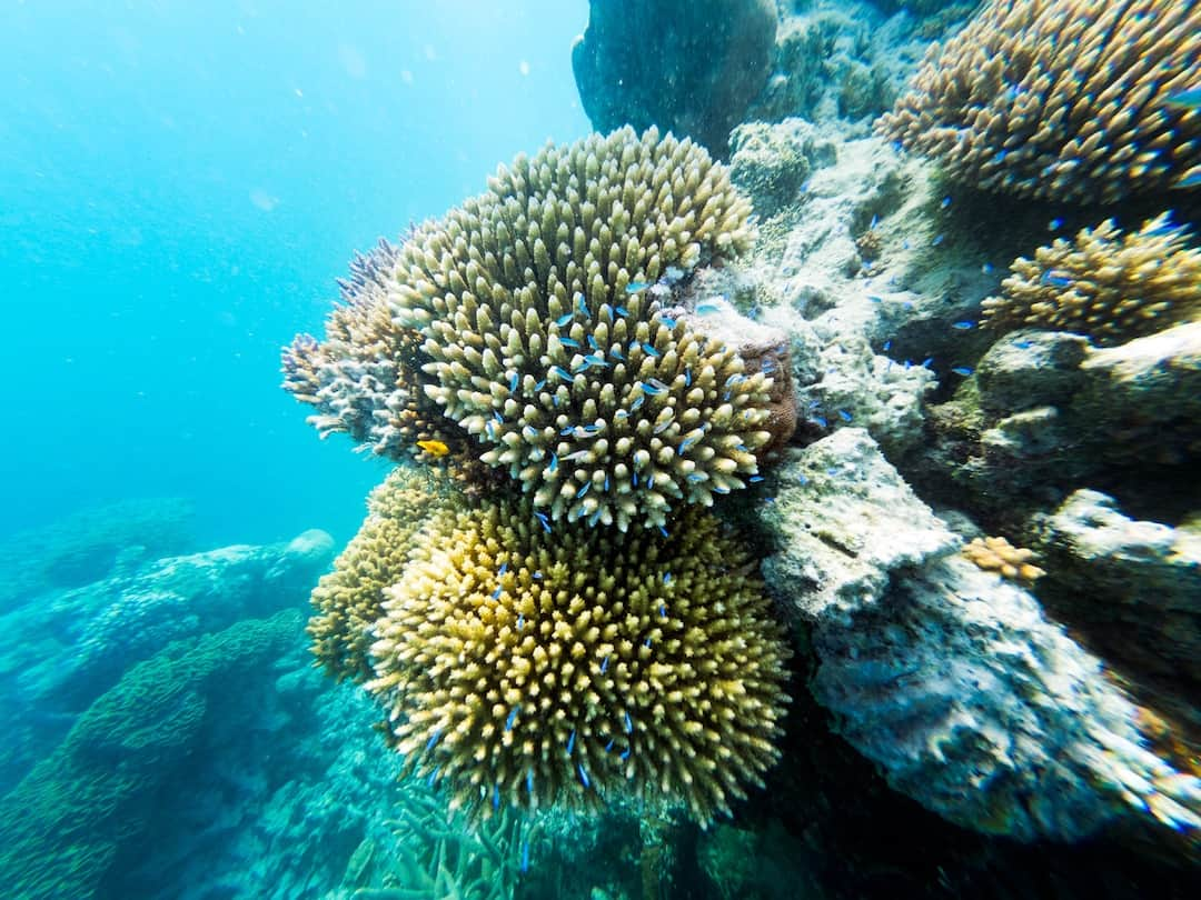 coral hardy reef