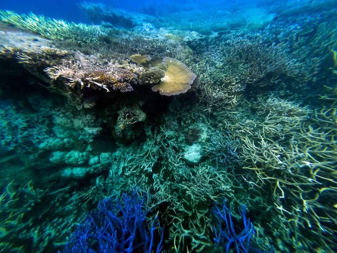 hardy reef underwater
