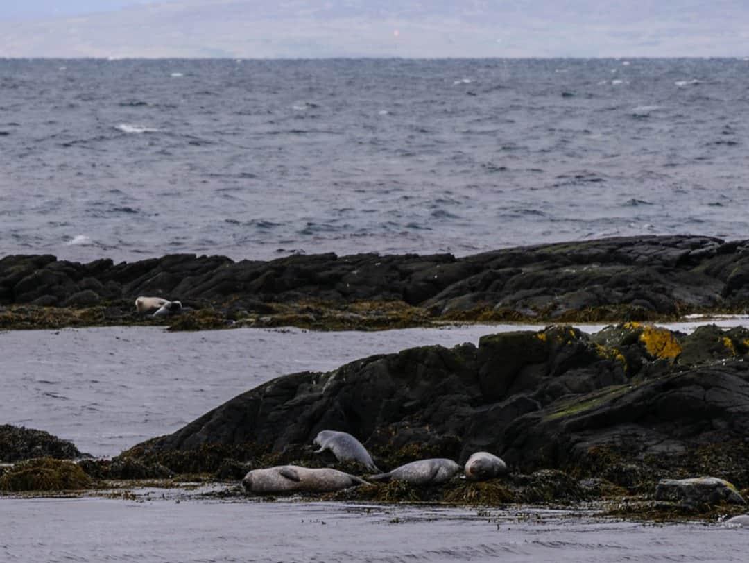seals Vatnsnesvegur - best place to see seals in Iceland