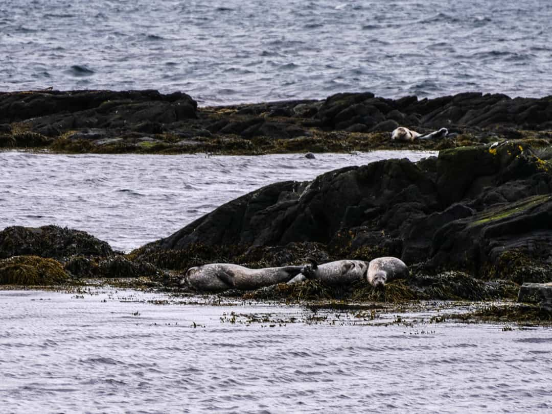 seals - best place to see seals in Iceland