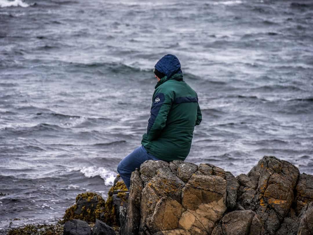watching seals