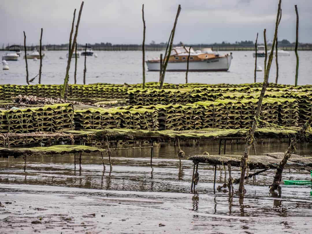 oyster leases