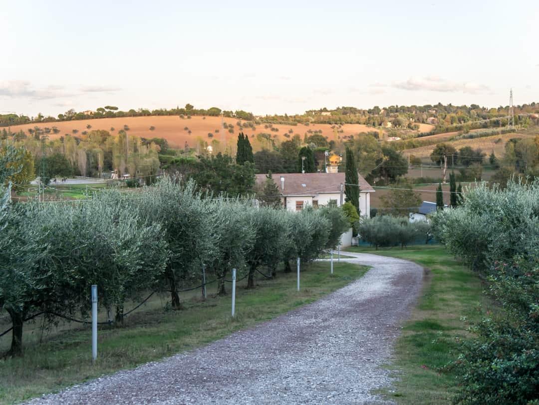 farm olive oil