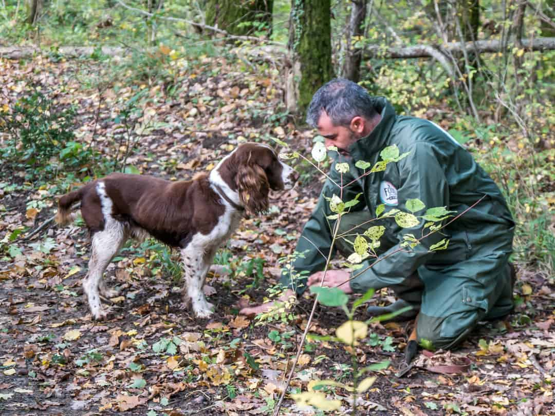 sauro and chico truffle hunting