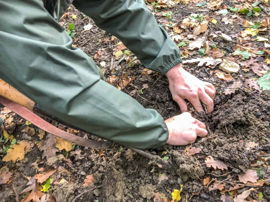 pulling up a truffle