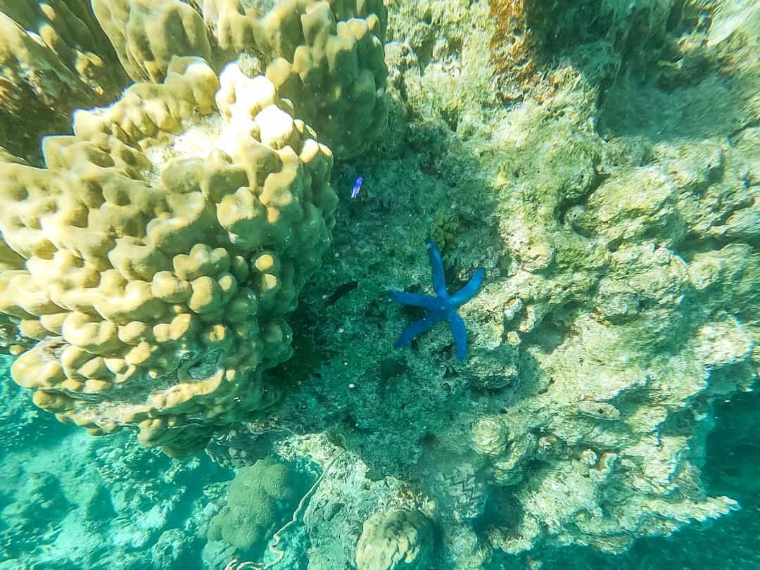 coral castaway isalnd