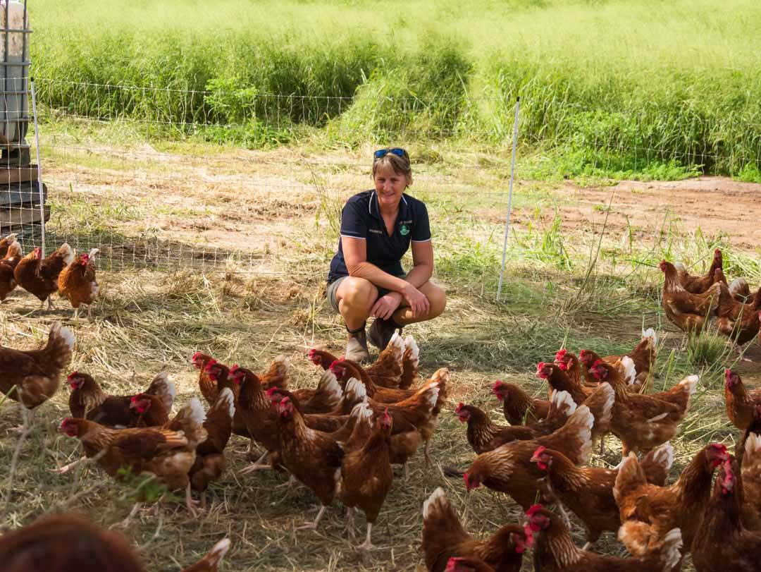9dorf chickens