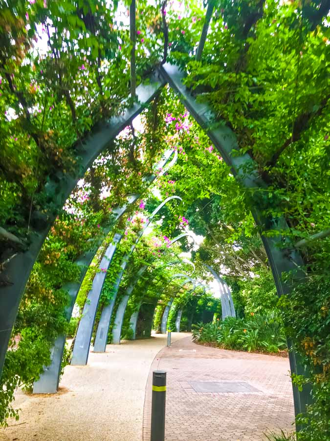 path through the South Bank Arbour
