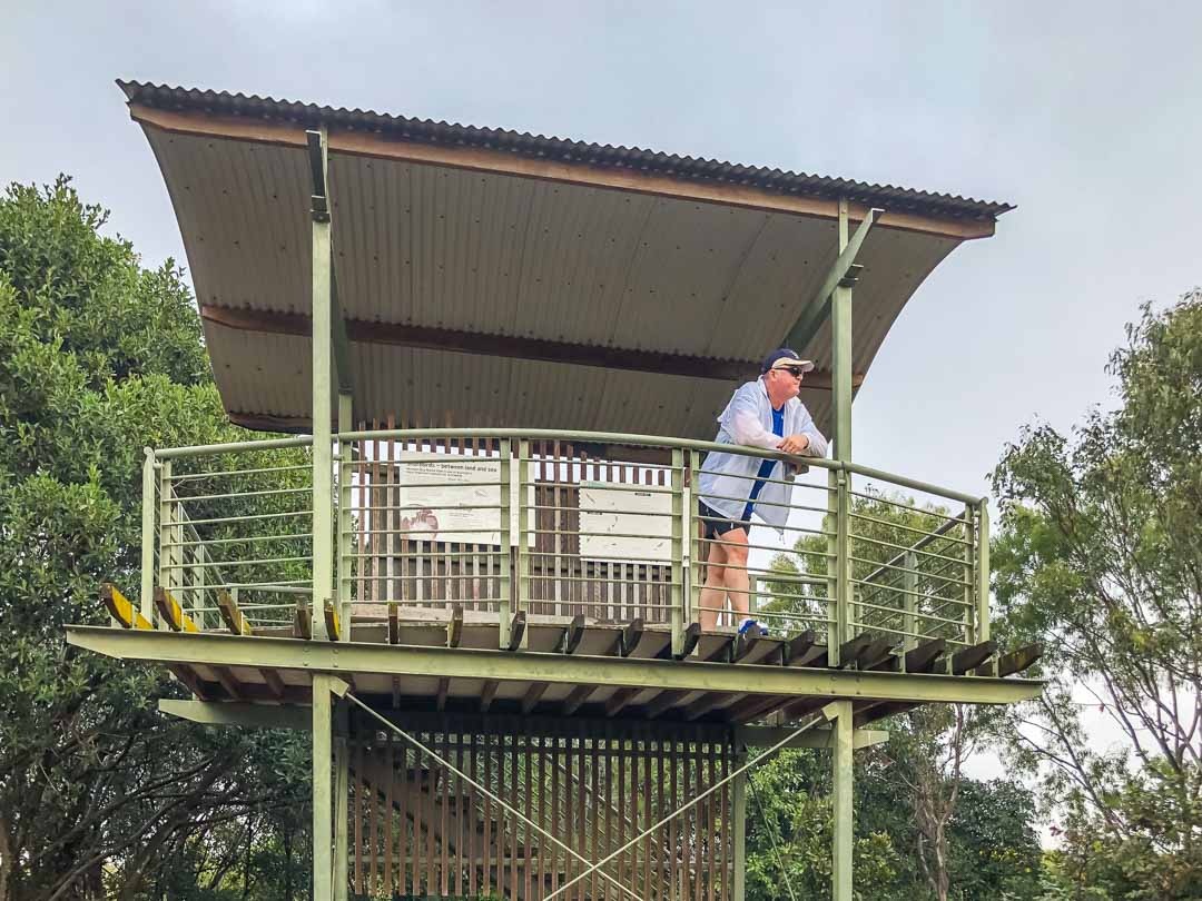 boondall wetlands viewing tower
